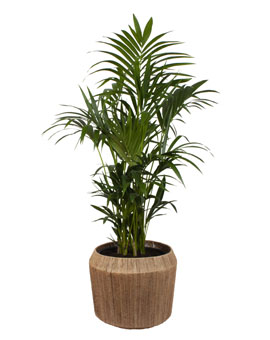XL Planten